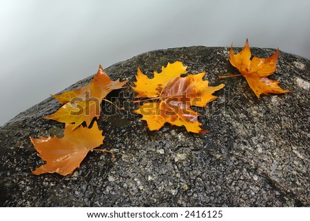 autumn leaves in the edge of the river - stock photo