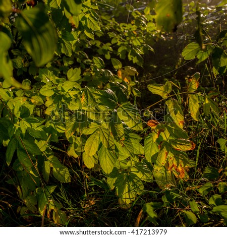 autumn leaves in the morning light - stock photo