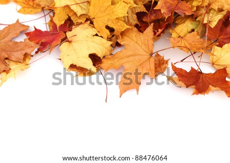 autumn leaves isolated in studio - stock photo