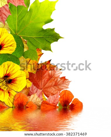 autumn leaves isolated on white background - stock photo