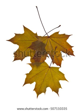 autumn leaves isolated on white background closeup