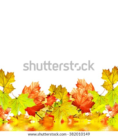 autumn leaves isolated on white background. Golden autumn;