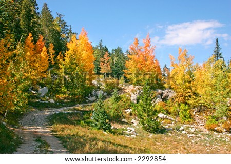 Autumn leaves line a fire road in the Sandia mountains of central New Mexico. - stock photo