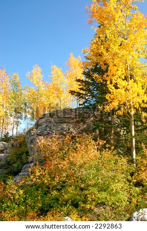 Autumn leaves line a ridge in the Sandia mountains of central New Mexico. - stock photo