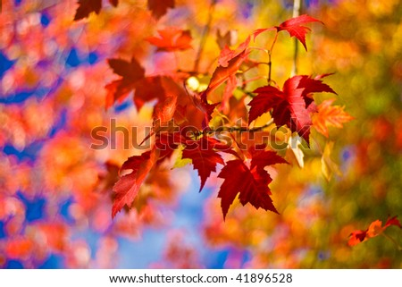 Autumn Leaves of different colors - stock photo