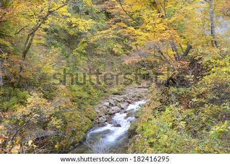 Autumn leaves of Jintsu Gorges
