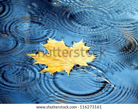 Autumn leaves of maple in the water - stock photo