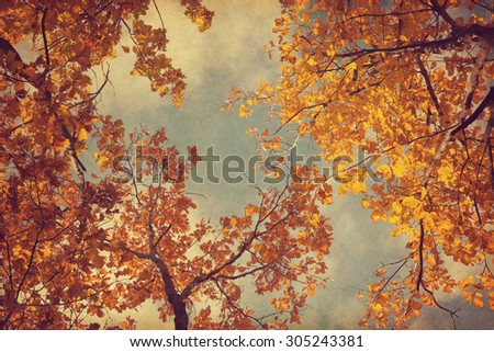 Autumn leaves of oak on the sky background.  Photo in retro style. Added paper texture. Toned image. - stock photo