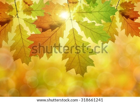 Autumn leaves of oak tree - stock photo