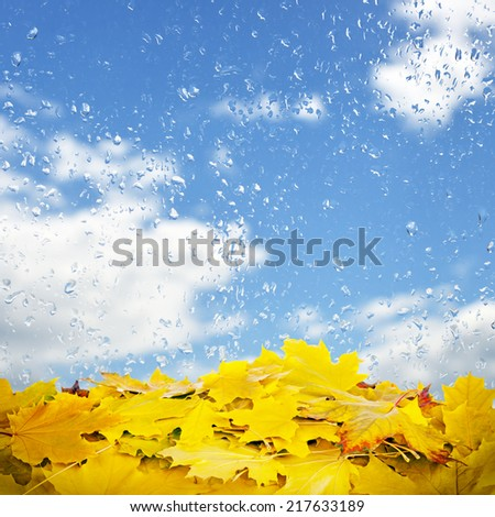 Autumn leaves on a background of a wet window - stock photo