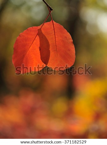 autumn leaves on a blurred background on a sunny day - stock photo