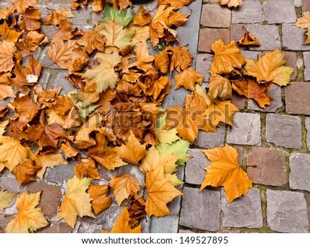 Autumn leaves on a cobblestone street. Background. - stock photo