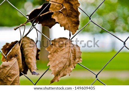 autumn leaves on a fence - stock photo