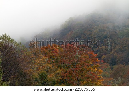 Autumn leaves on a foggy hillside in Great Smoky Mountains National Park in Tennessee - stock photo