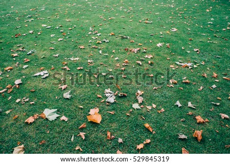 autumn leaves on a grass background