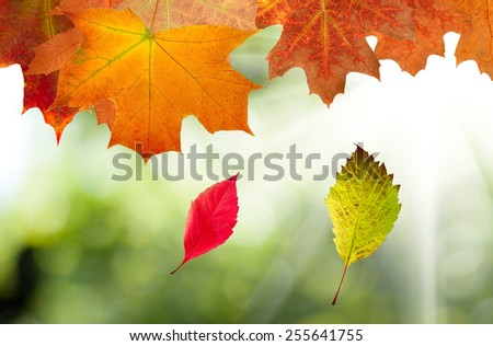 autumn leaves on a green background closeup - stock photo