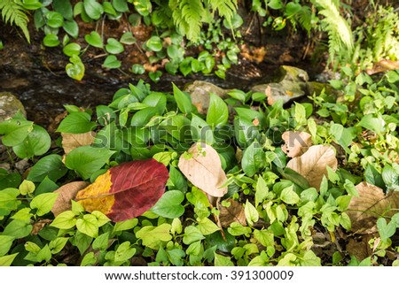 Autumn leaves on a meadow with waterfall. - stock photo