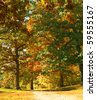 Autumn Leaves on a Park Trail - stock photo