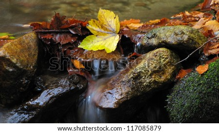 autumn leaves on a stones covered with moss in mountain stream - stock photo