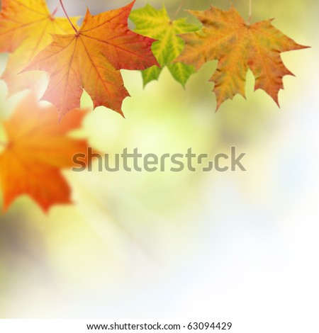 Autumn leaves on a tree background - stock photo