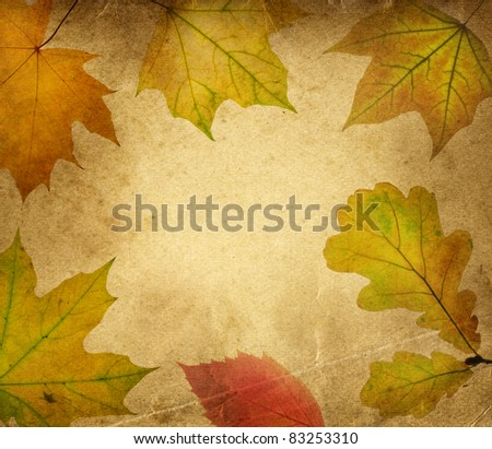 autumn leaves on an old paper - stock photo