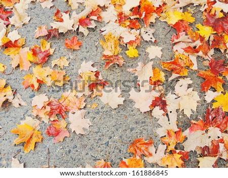 autumn leaves on asphalt - stock photo