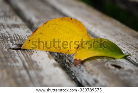Autumn leaves on bench . - stock photo