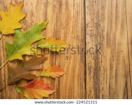 Autumn leaves on old wooden wall