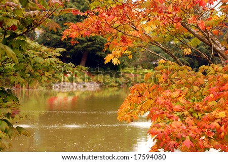 Autumn leaves on pond
