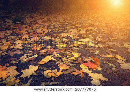autumn leaves on road and sun light, selective focus on foreground - stock photo