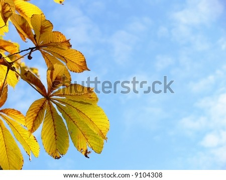 Autumn leaves on sky background, horse chestnut - stock photo