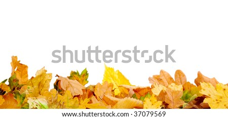 Autumn leaves on the ground - stock photo