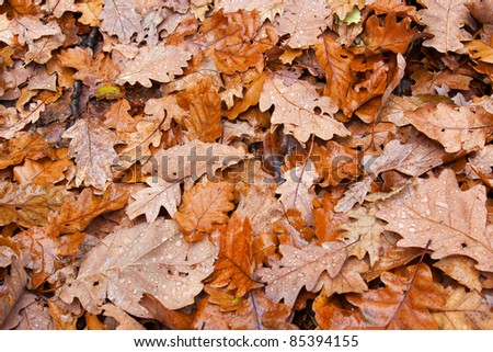 Autumn leaves on the ground with raindrops - stock photo