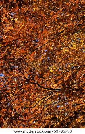 Autumn leaves on the tree illuminated by the sunlight.