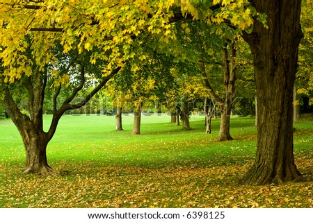 Autumn leaves on trees in park