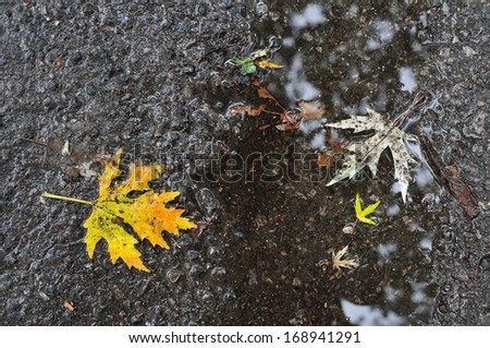 Autumn leaves on wet road - stock photo