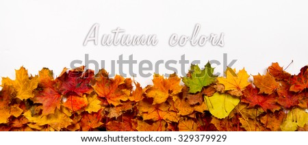 Autumn leaves on white background, ideal for banners, headers. Space for text above.