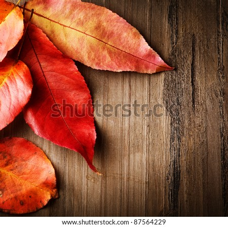 Autumn leaves over old wood background