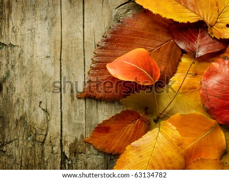Autumn Leaves over wood background.With copy space - stock photo