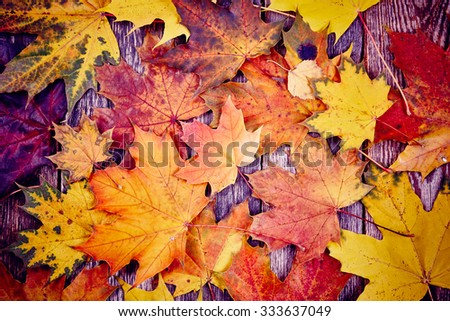 Autumn leaves over wooden background toned - stock photo