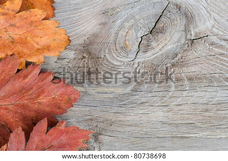 Autumn Leaves over wooden background.With copy space - stock photo