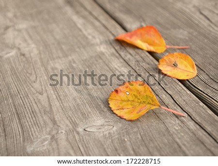 Autumn leaves over wooden boards floor - stock photo
