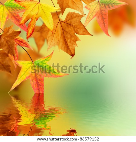 Autumn leaves pending over water - stock photo