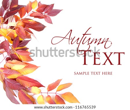 Autumn leaves red and yellow on white background