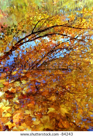 Autumn leaves reflected in a Mystic, Connecticut pond. - stock photo