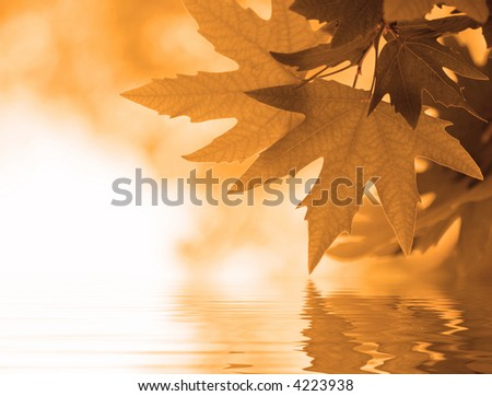 autumn leaves reflecting in the water, shallow focus - stock photo