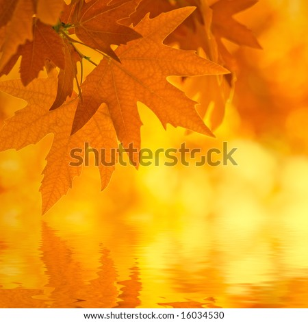 autumn leaves, reflecting in water, very shallow focus - stock photo