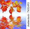 autumn leaves reflection - stock photo