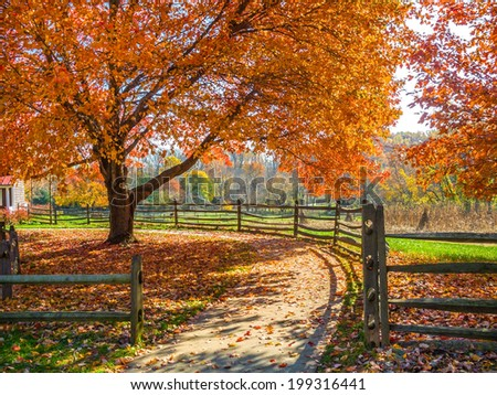 Autumn leaves scattered on the sidewalk under this maple tree in Holmdel Park in New Jersey. - stock photo