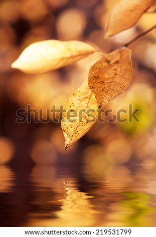 Autumn Leaves, selective focus, toned. Photo improved by water with reflection - stock photo